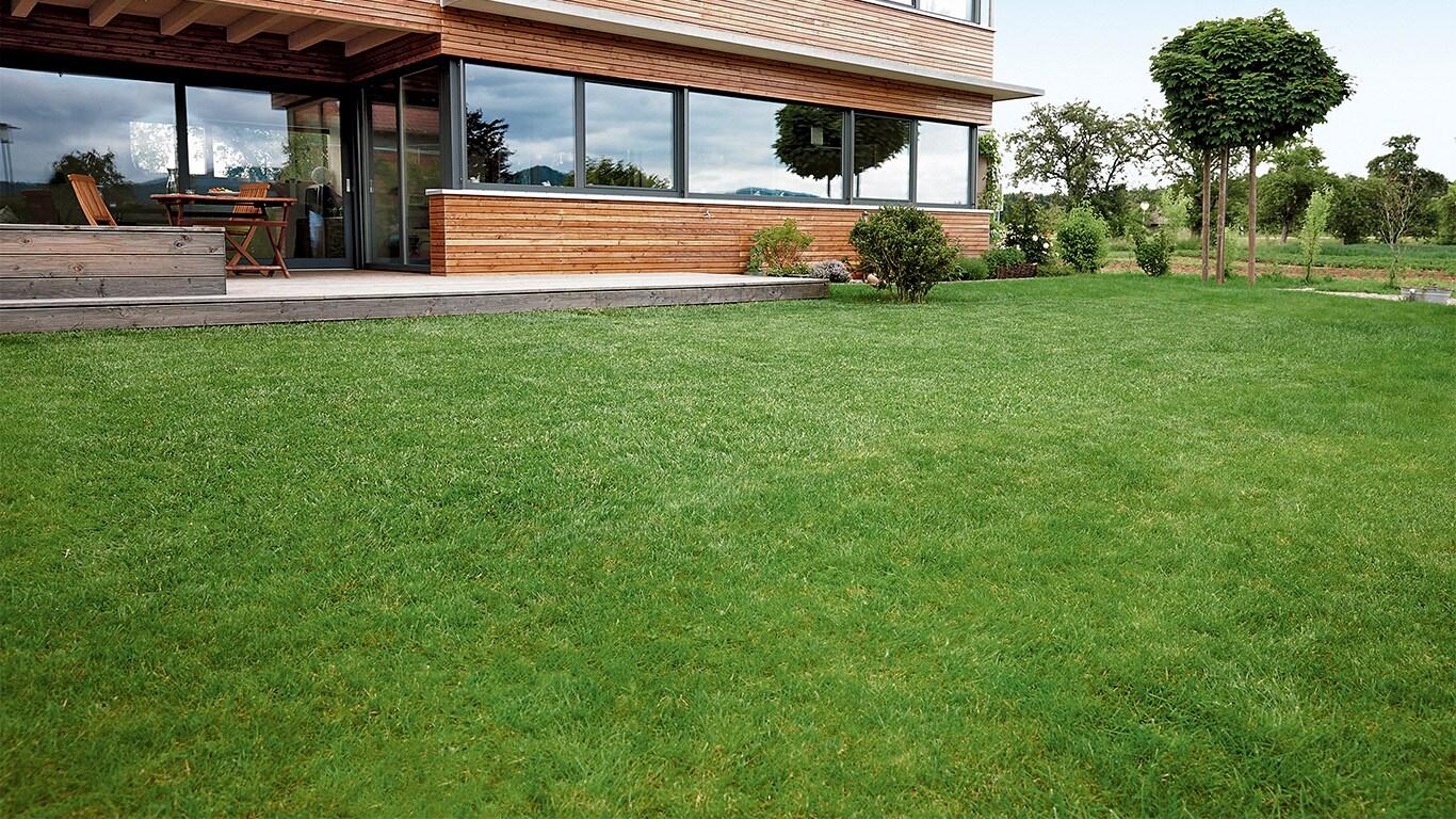 Na het verticuteren moet het gazon enkele dagen worden beschermd. Zo heeft het gras de optimale condities om na de impact van het verticuteren bij te komen.